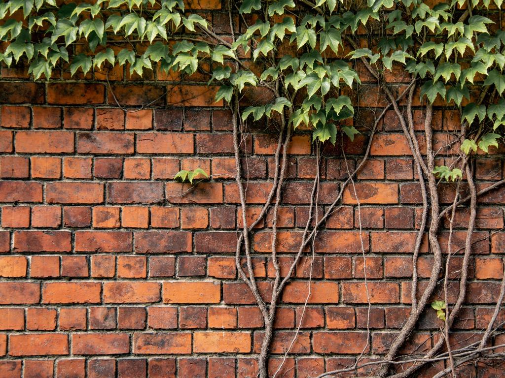 brick wall with vine