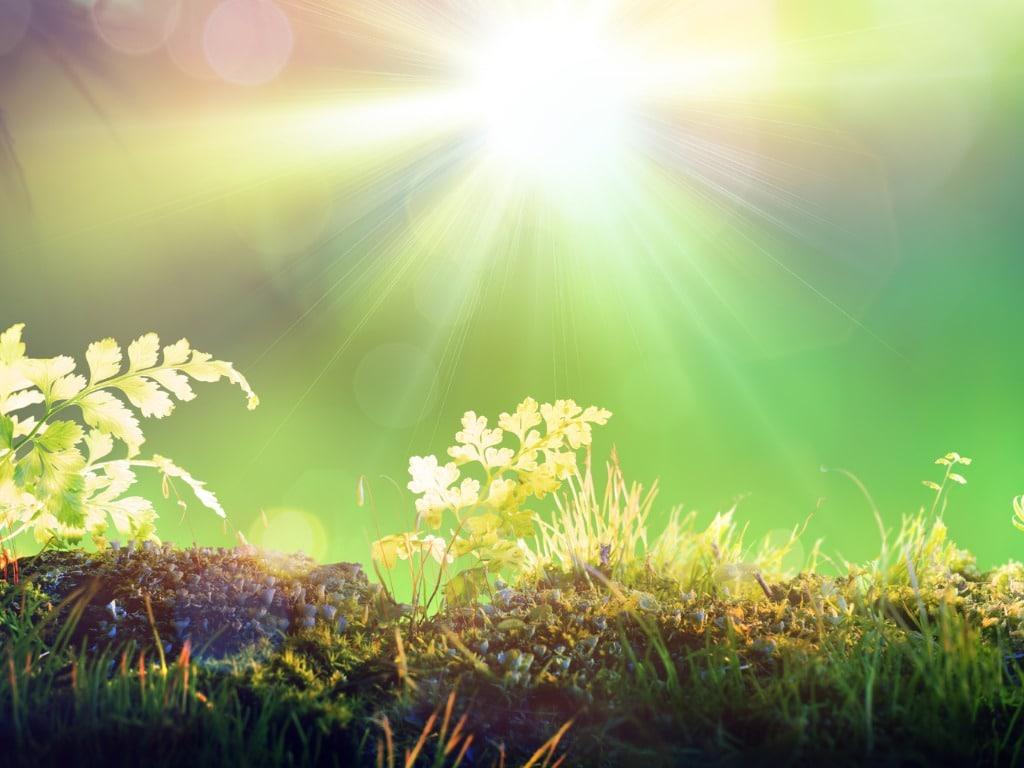 sunlight on fern